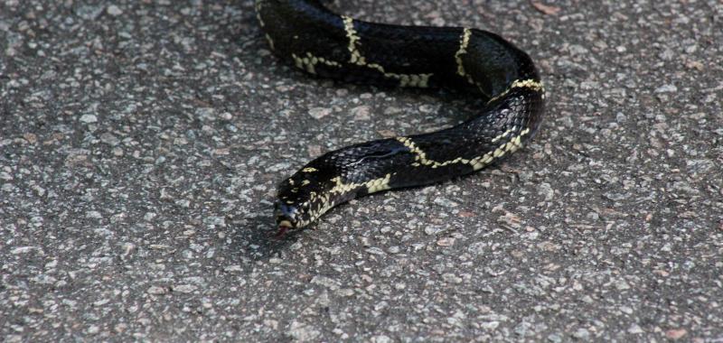 Backyard Saturday - Snake Day