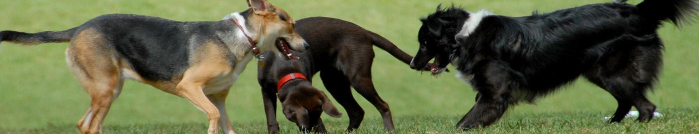 Barking Lot Dogs